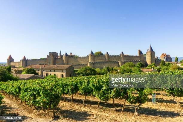 row vine grape in champagne vineyards at carcassonne background - carcassonne stock pictures, royalty-free photos & images