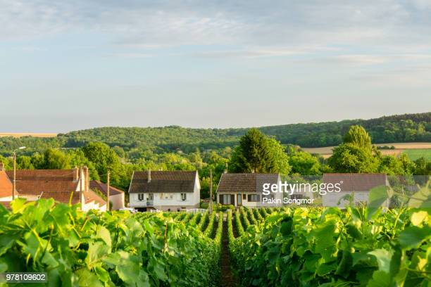 row vine green grape in champagne vineyards at montagne de reims on countryside village background - marlborough new zealand stock pictures, royalty-free photos & images