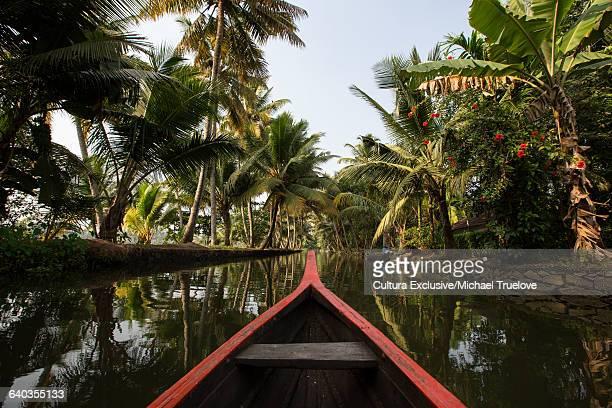 Rowing boat and palm trees on Kerala backwaters, Kollam, Kerala, India