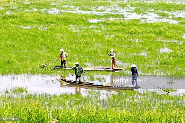 Rowing crew on wet paddy field in Vietnam