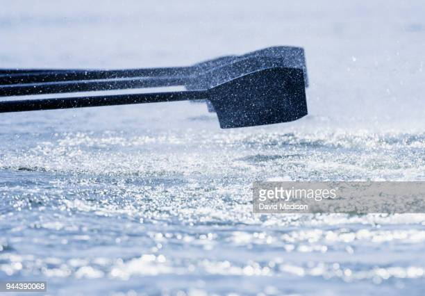 rowing team's oars, close-up - rowing stock pictures, royalty-free photos & images