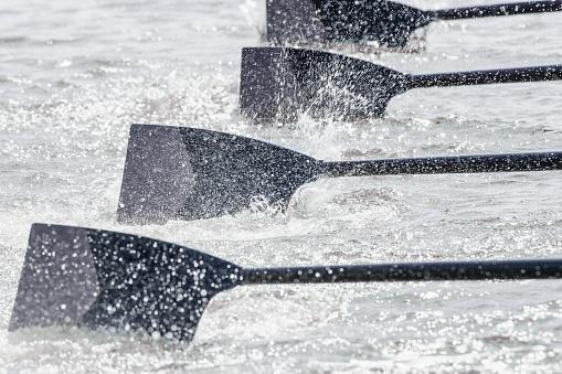 Rowing team's oars entering water - gettyimageskorea