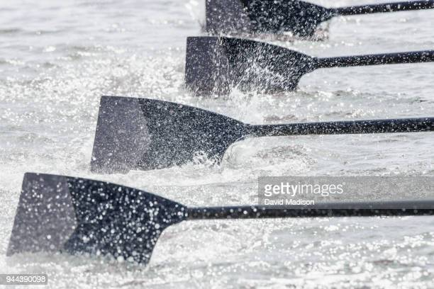 rowing team's oars entering water - sportmannschaft stock-fotos und bilder