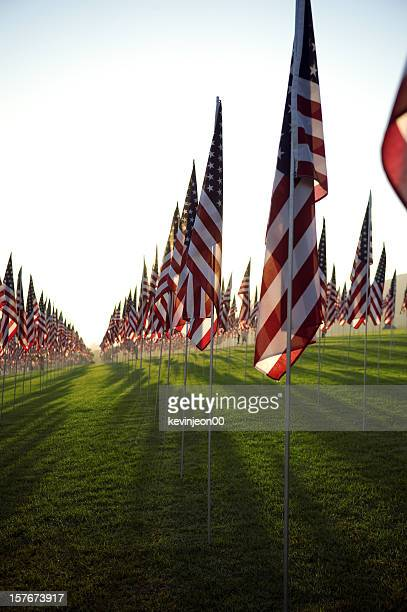 Rows of American flags with the sun behind them