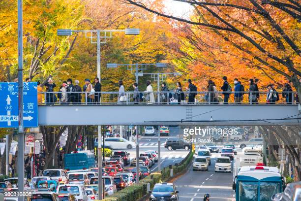 Rows of autumn leaves Zelkova surround the Omotesando (Frontal approach) between Harajuku and Aoyama district Shibuya Tokyo Japan on November 26 2017. People cross the pedestrian bridge and cross the street and cars go through the avenue under the bridge.