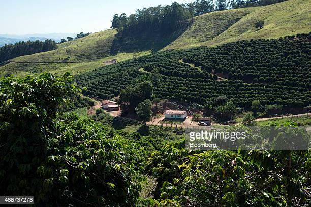 Rows of coffee plants stand at the Tijuco Preto estate in the state of Minas Gerais near Serra Negra, Brazil, on Monday, Feb. 10, 2014. Investors...