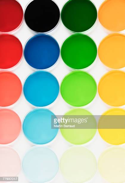 rows of colorful petri dishes - petri dish stock photos and pictures
