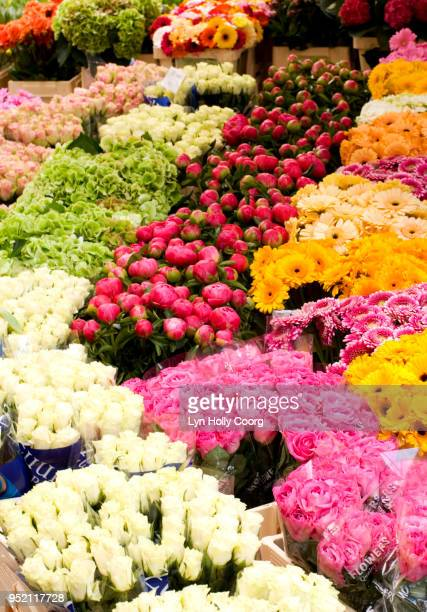 rows of coloured flowers for sale in marketplace - lyn holly coorg photos et images de collection