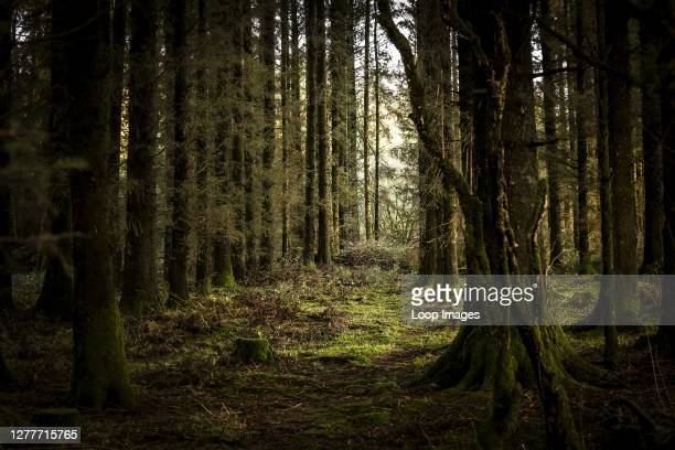 21 433 Dark Forest Photos And Premium High Res Pictures Getty Images You can also upload and share your favorite dark forest wallpapers. 21 433 dark forest photos and premium high res pictures getty images