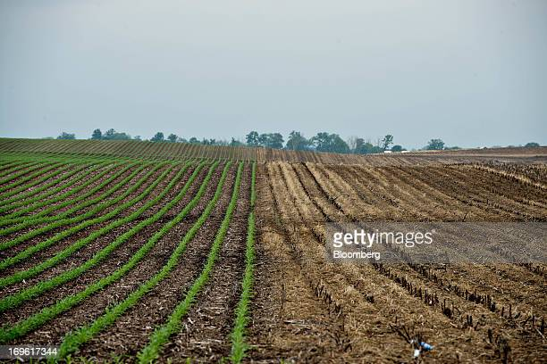 Rows of corn grow near an unplanted field outside Wyanet Illinois US on Tuesday May 28 2013 Much of Iowa and central Illinois the largest corn and...