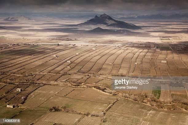 Rows of grape berms in farmland in Kandahar