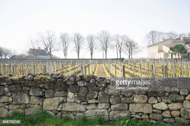 rows of grape vines surrounded by stone walls in saint-emilion, france - stone wall imagens e fotografias de stock
