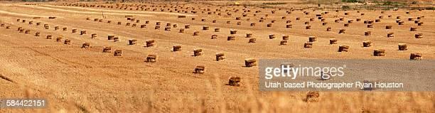 Rows of hay bales in Hayfield