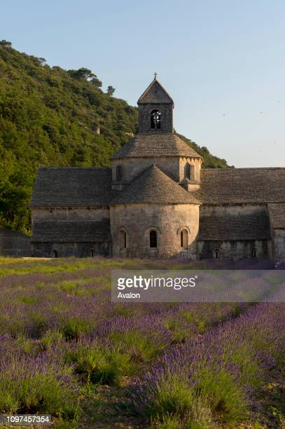 Rows of lavender in front of the Senanque Abbey, which is a Cistercian abbey near the village of Gordes in the Vaucluse in Provence, France.