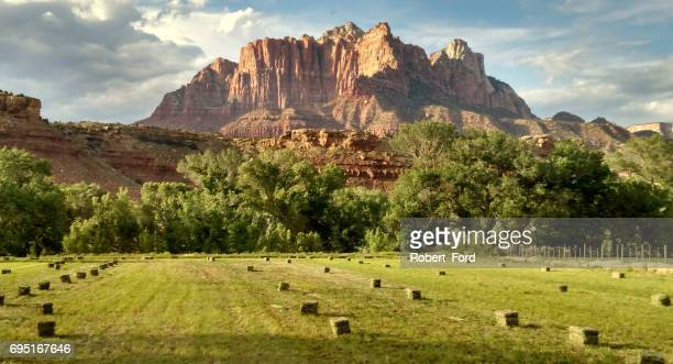 Rows of newly cut hay bales in pastures below Mt Kinesava in Zion National Park Utah