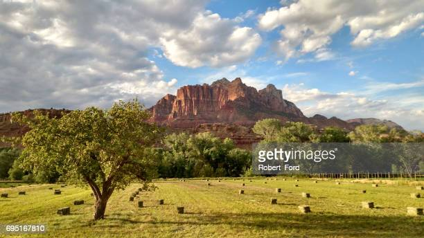 Rows of newly cut hay bales in pastures below Mt Kinesava in Zion National Park Utah