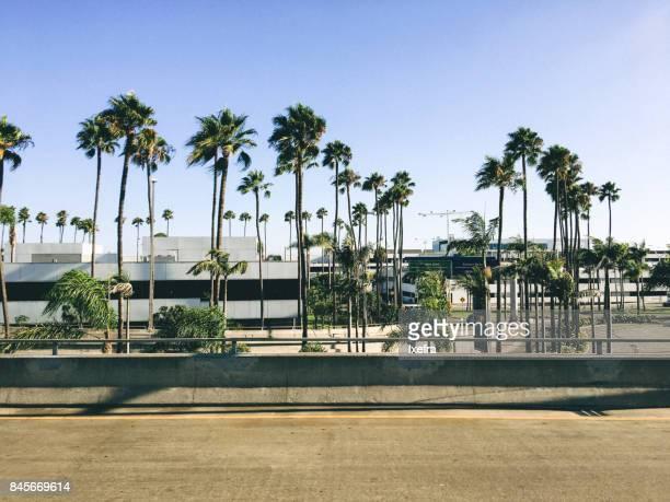rows of palm trees in los angeles - sherman oaks - fotografias e filmes do acervo