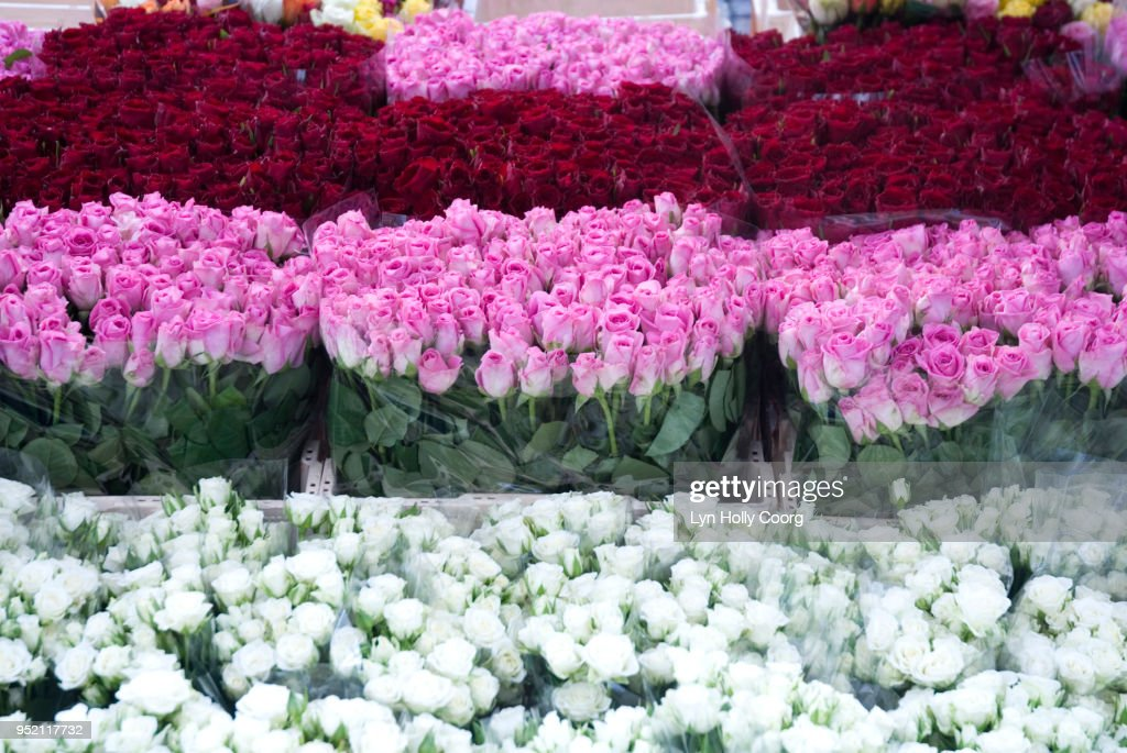 Rows of Pink, Red and White roses for sale in marketplace : Stock Photo