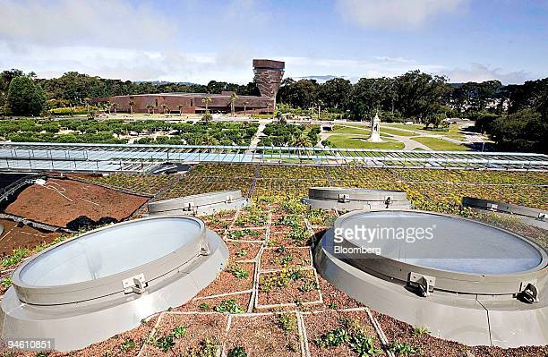 Rows of plant trays are interrupted by skylights on the roof of the new Academy of Sciences building in Golden Gate Park in San Francisco California...