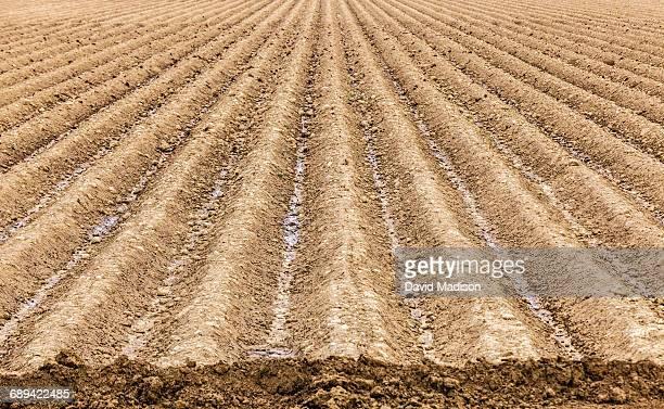 Rows of plowed earth in a farm field.