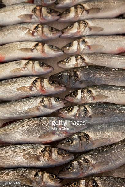 rows of sardines for sale in fish market