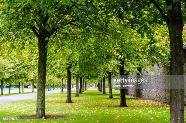 つながるダブリンの近代美術館にいじめっ子のエーカーの墓地公園の路地に木の行