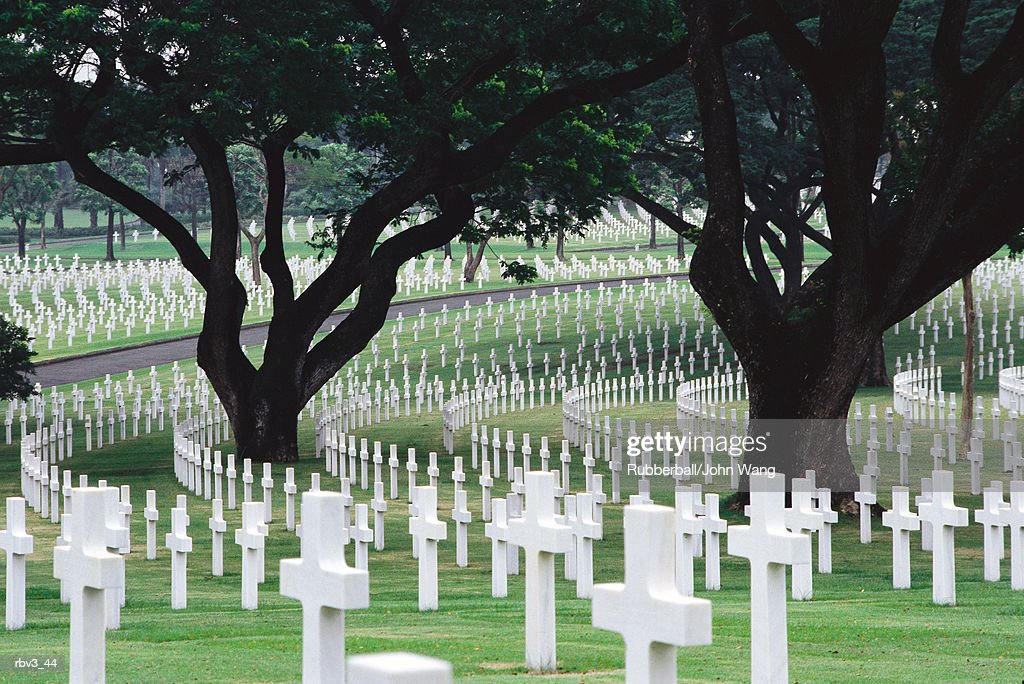 rows of white crosses go around large green trees in a cemetery : Foto de stock