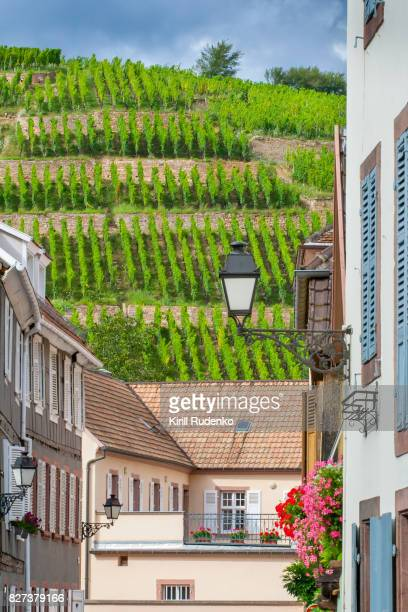 Rows of wines above village in Alsace, France