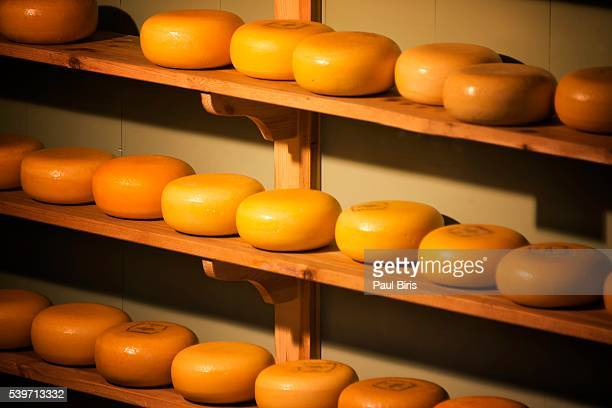 Rows of Yellow Rind Dutch cheese, Gouda, Alkmaar, Netherlands