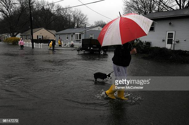 Roy Casey walks dog Buddy from his flooded neighborhood on Moore and Perkins Street March 30 2010 as the Pawtuxet River crests in Cranston Rhode...