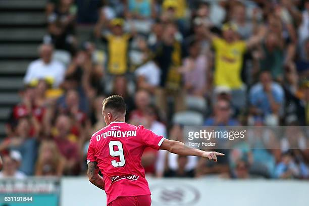 Roy O'Donovan of the Mariners celebrates a goal during the round 14 ALeague match between the Central Coast Mariners and Sydney FC at Central Coast...