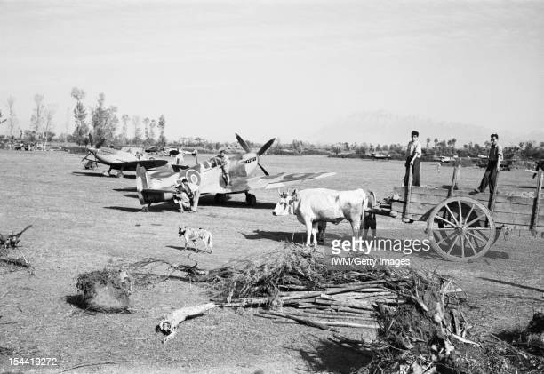 Italy The Balkans And Southeast Europe 19421945 Supermarine Spitfire Mark IXs and VCs of No 232 Squadron RAF undergoing servicing at Serretelle...