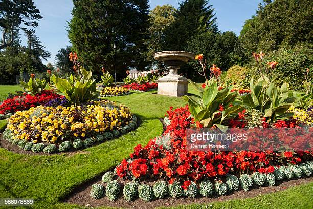 royal avenue gardens, bath city, uk - canna lily stock pictures, royalty-free photos & images