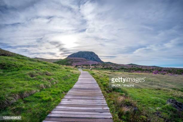 royal azalea and sunrise of mount hallasan, jeju island, korea - hallasan stock photos and pictures