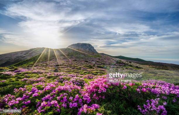 255 Royal Azalea Photos And Premium High Res Pictures Getty Images