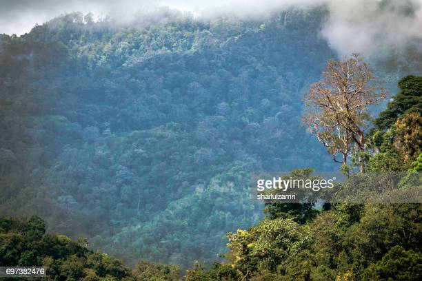 royal belum rainforest park - is believed to have been in existence for over 130 million years making it one of the world's oldest rain-forests. - shaifulzamri fotografías e imágenes de stock