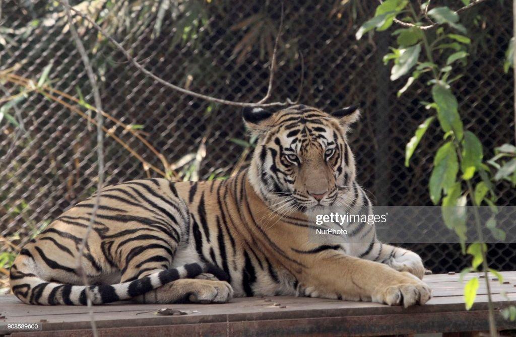 India Wild Life
