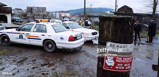 Royal Canadian Mounted police cars are parked at the entrance to a pig farm February 7 2002 in Port Coquitlam British Columbia Authorities are...