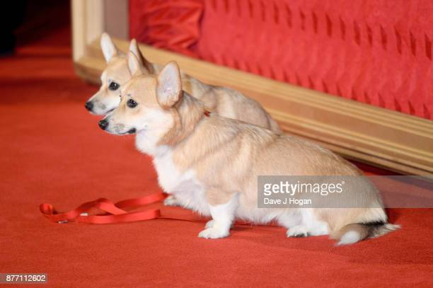 Royal corgis attend the World Premiere of season 2 of Netflix 'The Crown' at Odeon Leicester Square on November 21 2017 in London England