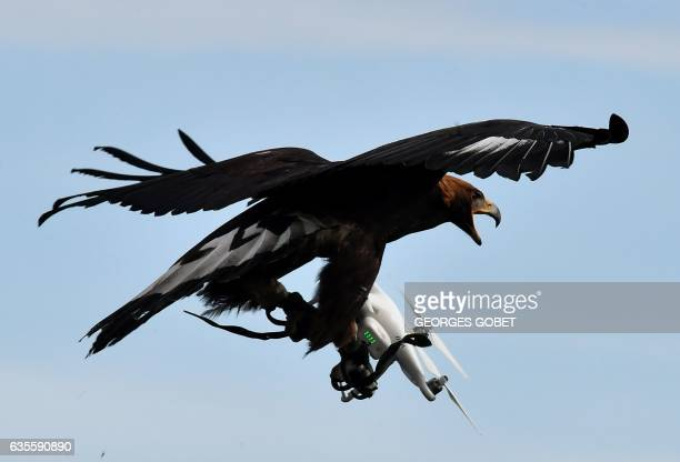 A royal eagle catches a drone during flight during a military exercise at the MontdeMarsan airbase southwestern France on February 10 2017 As...