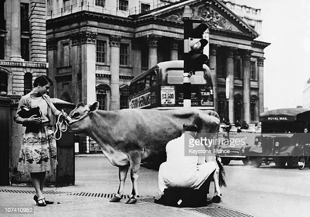 Royal Exchange Unusual Inauguration Of Dairy Products Show With Farmers Milking their Cow In The Street On May 31St 1959