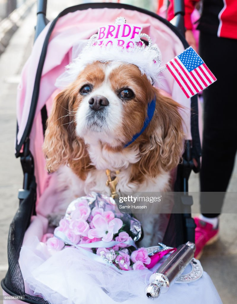 A royal fan and her dog gather outside Windsor Castle on May 17, 2018 in Windsor, England. Preparations continue in the town for the wedding between Prince Harry and Ms. Meghan Markle on May 19, 2018 when tens of thousands of well wishers will descend on the town just west of London to celebrate the couple's big day.