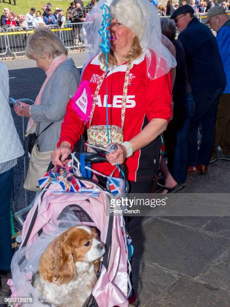 Royal fan Anne Daley with her dog Camilla on the street close to Windsor Castle ahead of the royal wedding of Prince Harry to Ms Meghan Markle