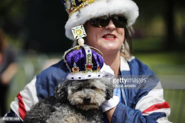 A Royal fan draped in the colours of the Union flag holds a dog bedecked with a crown as she waits along the Long Walk in Windsor on May 18 the day...