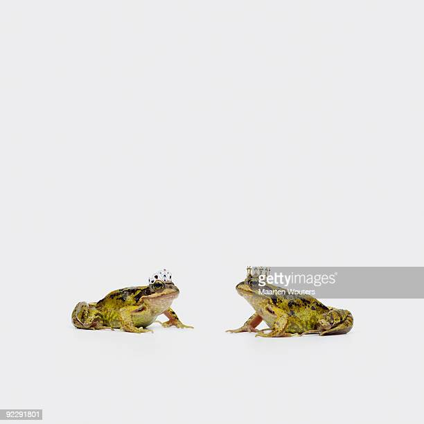 royal frogs