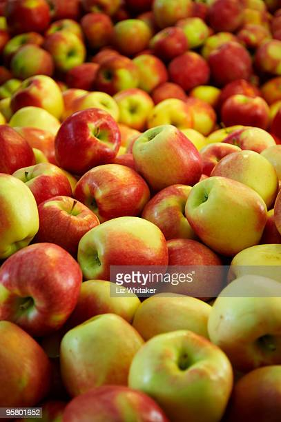 royal gala apples, full frame - royal gala apple stock photos and pictures