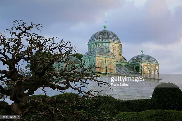 royal greenhouses in laeken (brussels) - laeken stock pictures, royalty-free photos & images