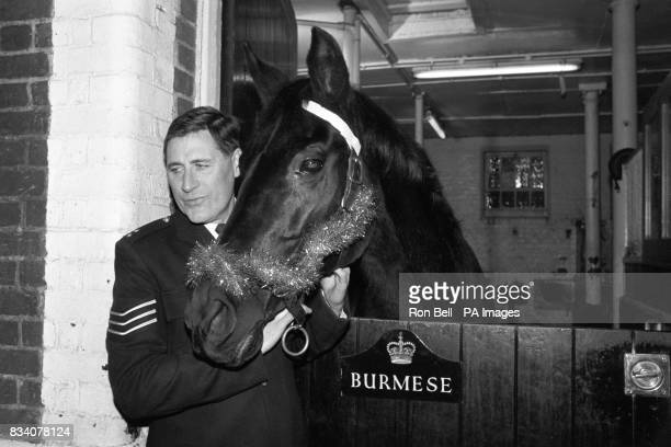 Royal horse Burmese in his stable at Rochester Row police station in London with Sergeant Robin Porter