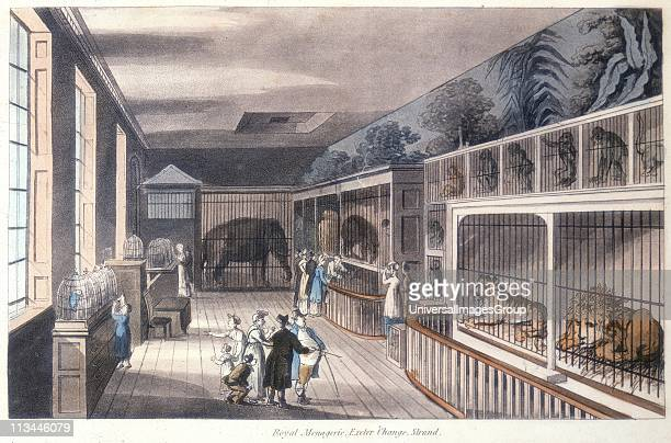 Royal Menagerie, Exeter Change, Strand, London', c1820. Edward Cross kept his menagerie here until Exeter Change was demolished in 1829 and he moved...