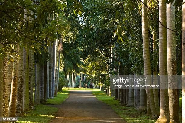 Royal Palms, Royal Botanical Gardens, Pamplemousses, Northern Mauritius, Africa